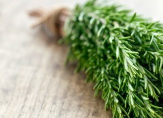 Daily Bite Wellness Tip - Smell Rosemary for Energy - Featured Image